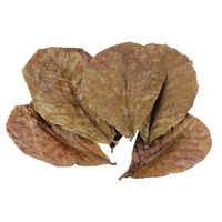 Aqua-Pics Indian Almond Leaves 10Pk aaa Grade