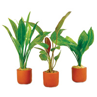 3 Pack Assorted Crypt In Terracotta 3Cm Pot