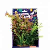 Amazon Jungle Mixed Ludwigia Display 20cm